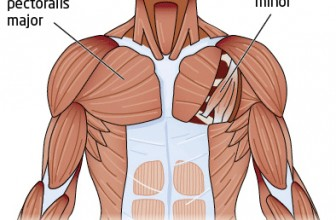 TOP 10: Best Chest Workouts & Exercises
